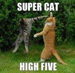 Super Cat High Five reduced_picc.jpg