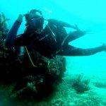 divingphot2.jpg